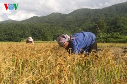 支援者のベトナムの貧困解消事業への支援をアピール - ảnh 1