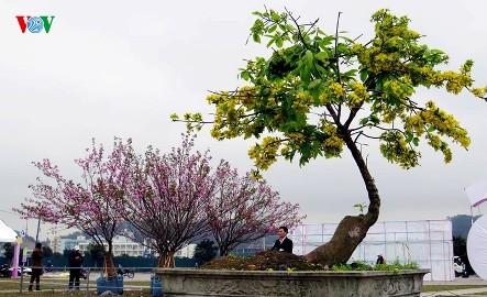 3月中旬に、「イェントゥ・ハロン桜・梅祭り」開催 - ảnh 1
