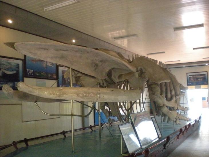 クジラ信仰とは - ảnh 4