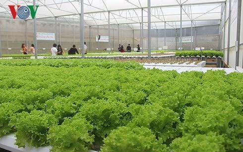 農業分野への企業の投資を奨励 - ảnh 1