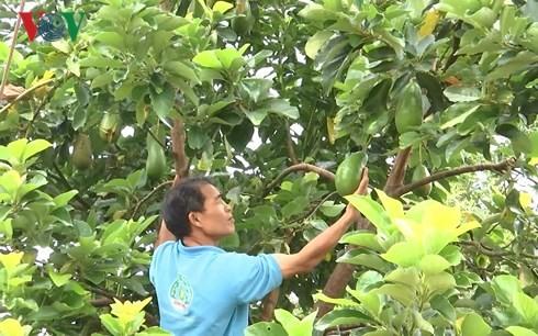 コーヒー畑に果樹栽培を行ったモデル - ảnh 1