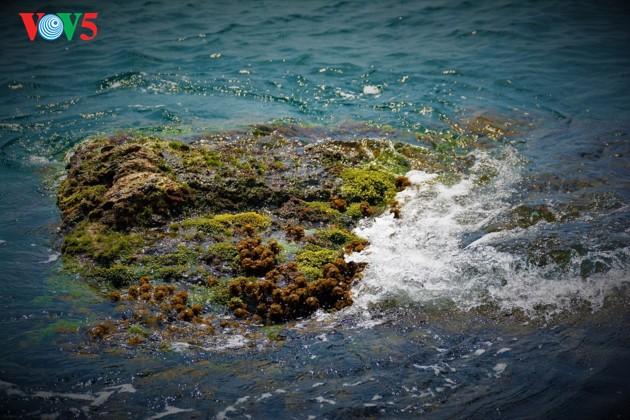 ナムズー群島の美しさ - ảnh 13