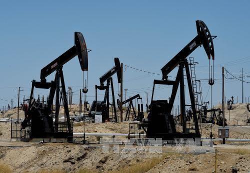 OPECが国際市場におけるバランスを支持 - ảnh 1