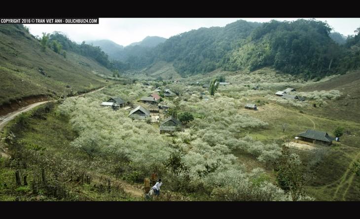 Berwisata untuk mendapat pengalaman di  dataran tinggi Moc Chau - ảnh 1