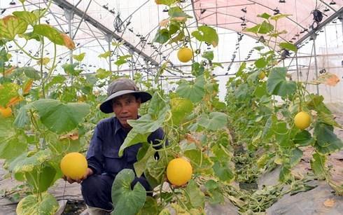 Pertumbuhan hijau bertujuan  menghadapi perubahan iklim - ảnh 1