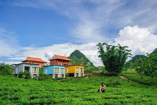 Wisata homestay: Destinasi  yang menarik di Kabupaten Moc Chau - ảnh 1