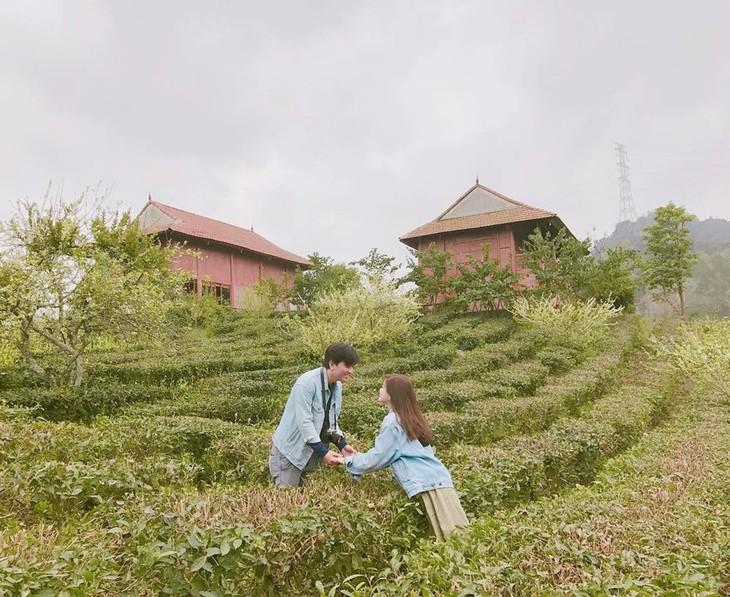 Wisata homestay: Destinasi  yang menarik di Kabupaten Moc Chau - ảnh 2