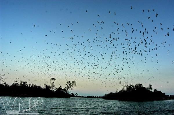 Pulau burung Bangau Chi Lang Nam-destinasi bagi para wisatawan - ảnh 2