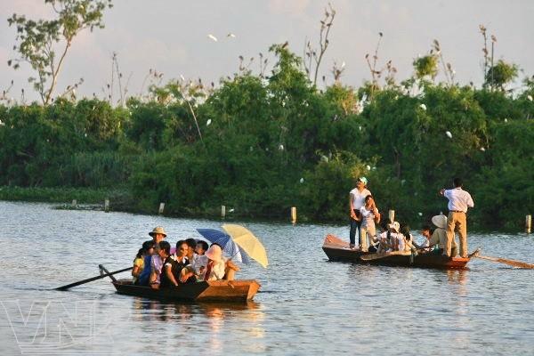 Pulau burung Bangau Chi Lang Nam-destinasi bagi para wisatawan - ảnh 4