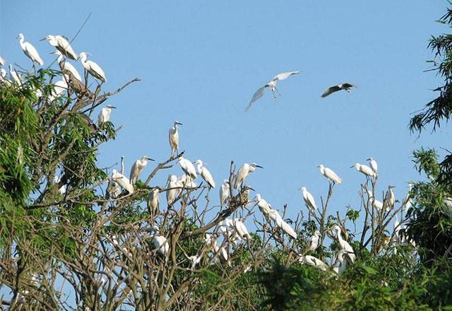 Datang mengunjungi kebun burung bangau Bang Lang - ảnh 2