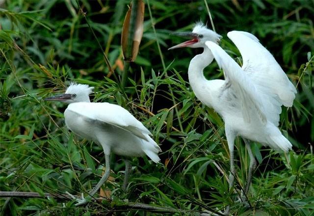 Datang mengunjungi kebun burung bangau Bang Lang - ảnh 3