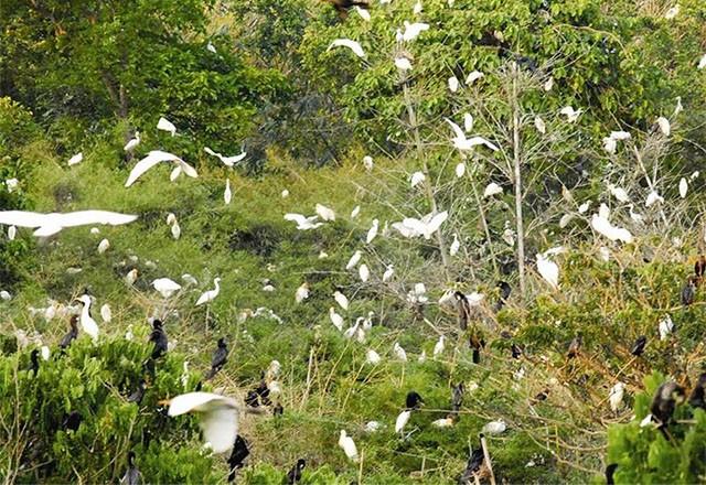 Datang mengunjungi kebun burung bangau Bang Lang - ảnh 4