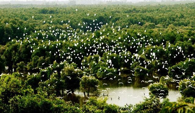 Datang mengunjungi kebun burung bangau Bang Lang - ảnh 1