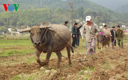 """New Year's """"Going to the field"""" festival of the Giay - ảnh 2"""