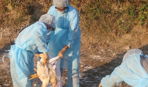 US finances Vietnam's human health protection, animal epidemic control - ảnh 1