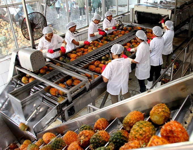 Production by value chains increases Vietnam's vegetable and fruit