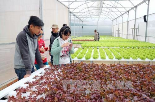 Lam Dong to spend nearly 2 million USD on sustainable agriculture production chains - ảnh 1