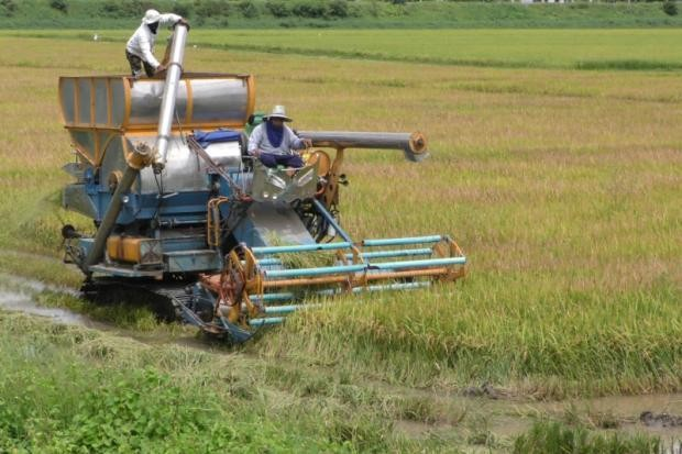 Sustainable agriculture development in ASEAN integration - ảnh 1
