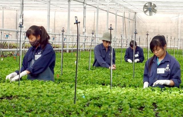 High-tech farming model helps farmers escape poverty - ảnh 1