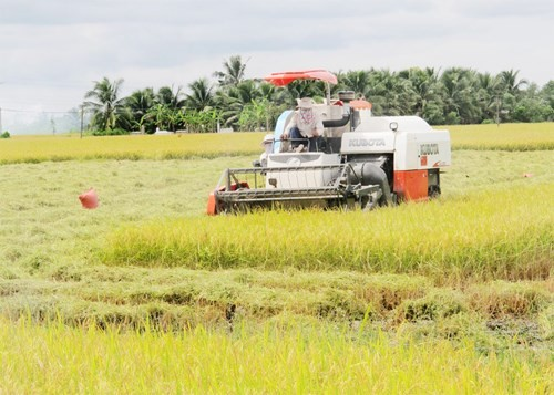 Agricultural restructuring in response to climate change - ảnh 1