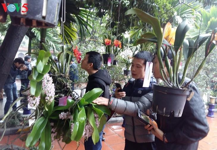 Hanoi hosts annual orchid festival - ảnh 3