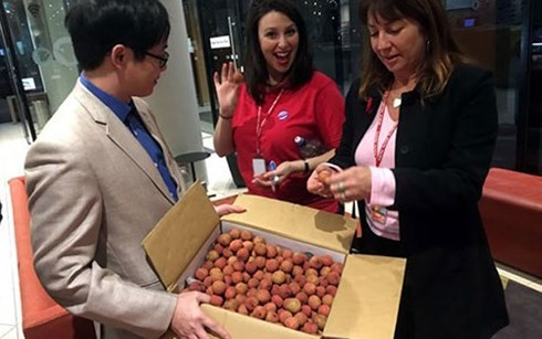 Vietnamese lychees much sought after in Australia - ảnh 1