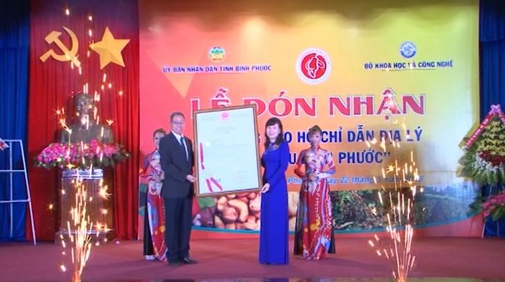 L'indication géographique pour les noix de cajou de Binh Phuoc  - ảnh 1