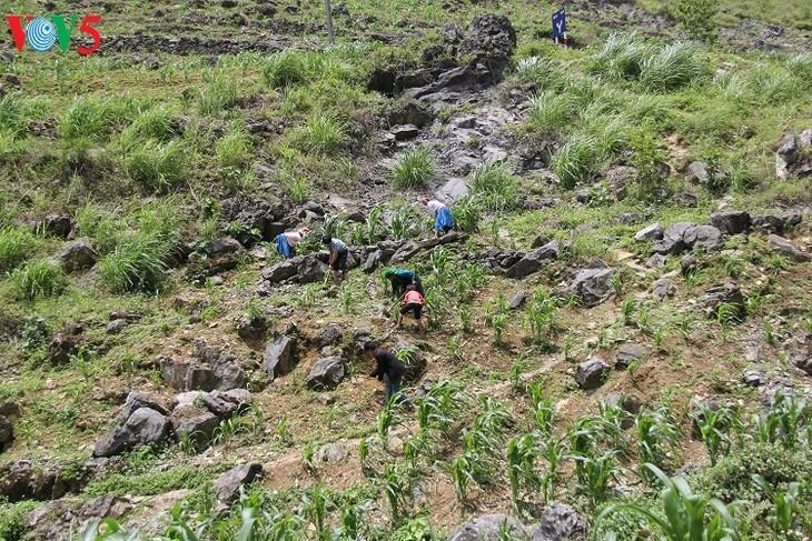 Le plateau karstique de Dông Van à Hà Giang - ảnh 3