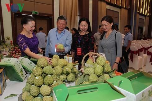 La province de Son La encourage l'exportation de produits agricoles propres - ảnh 1