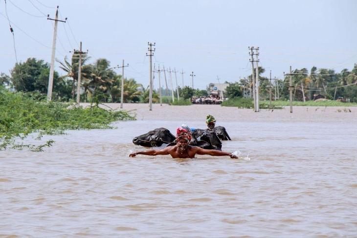 Mousson en Inde: un million de déplacés, 184 morts dans des inondations - ảnh 1