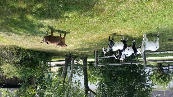 Having a farm in the US - ảnh 2
