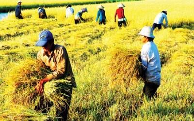 農業部門、2015年の輸出総額を320億ドルに達するという目標を掲げる - ảnh 1