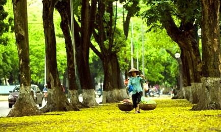 ベトナム秋の情景 - ảnh 1