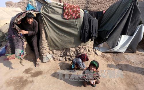 チャド湖一帯での人道危機に関するオスロ国際会議開催 - ảnh 1