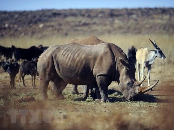 野生動物の不正取引に関するフィルム制作コンクール - ảnh 1