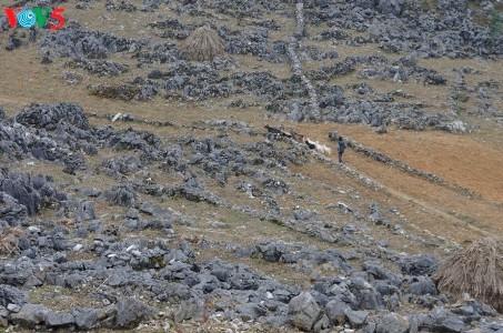 ハザン省のドンバン岩石高原・メオバックへの探検 - ảnh 2