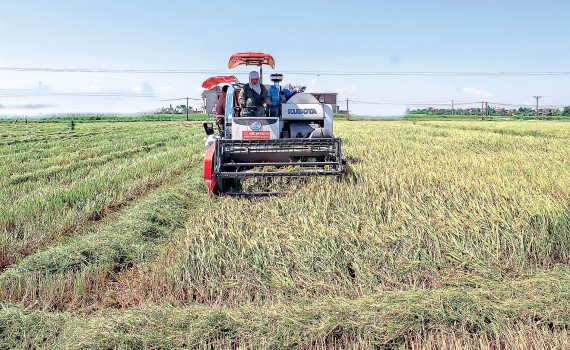 タイビン省、農業経済を発展 - ảnh 1