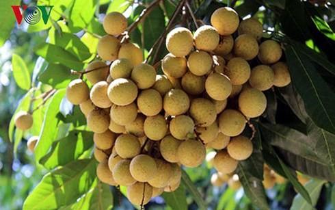 ベトナム農産物を厳しい市場への出荷を推進 - ảnh 2