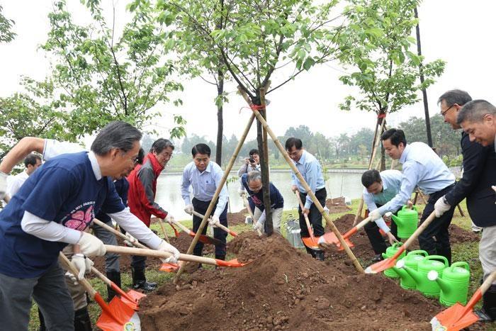 ホアビン平和公園で1000本の桜を植える - ảnh 1