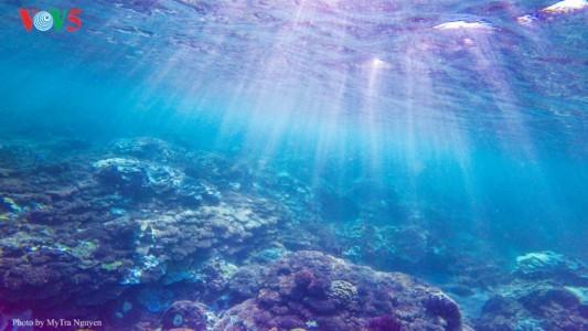 魅力的な観光地・リーソン島 - ảnh 3