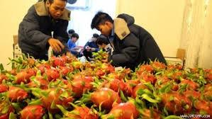 TPP生效后越南向秘鲁出口的商品将享受零关税 - ảnh 1