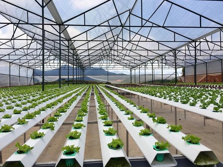 高科技农业——西原地区经济可持续发展的方向 - ảnh 1