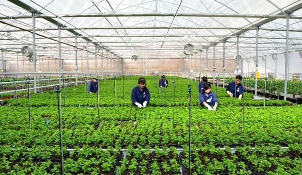 高科技农业——西原地区经济可持续发展的方向 - ảnh 2