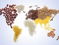 亚太经合组织粮食安全会议周结束 - ảnh 1