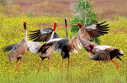 5.22国际生物多样性日:保护生物多样性论坛举行 - ảnh 1