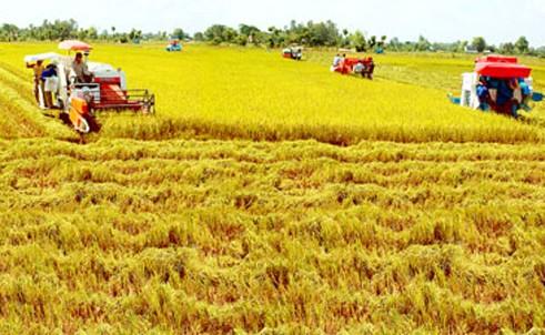 越南发展稻米市场 - ảnh 1
