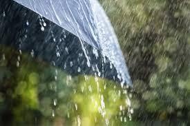 在雨中听雨唱  听心唱 - ảnh 1