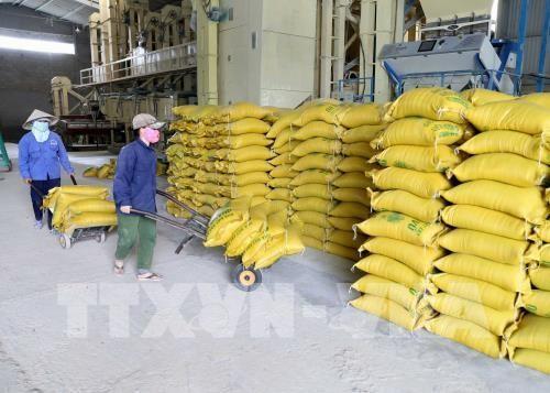 越南面向大米可持续出口目标 - ảnh 1