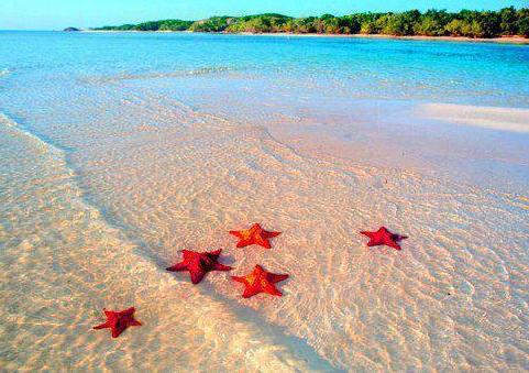 美丽的富国岛海星滩 - ảnh 2