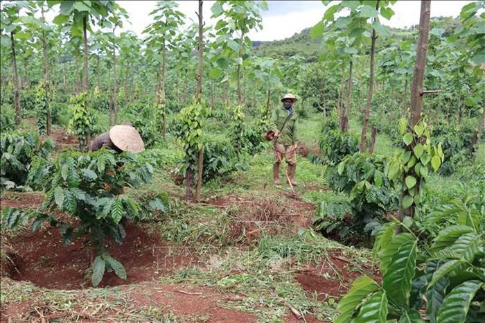 越南努力开展地区消饥减贫工作 - ảnh 1